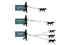 Picture of TRIPLE GUIDE FOR DOGS